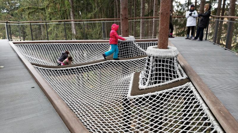 Canopy Walk in Whiting Forest