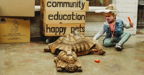 Lou's Pet Shop in Grosse Pointe Woods: a Unique Experience