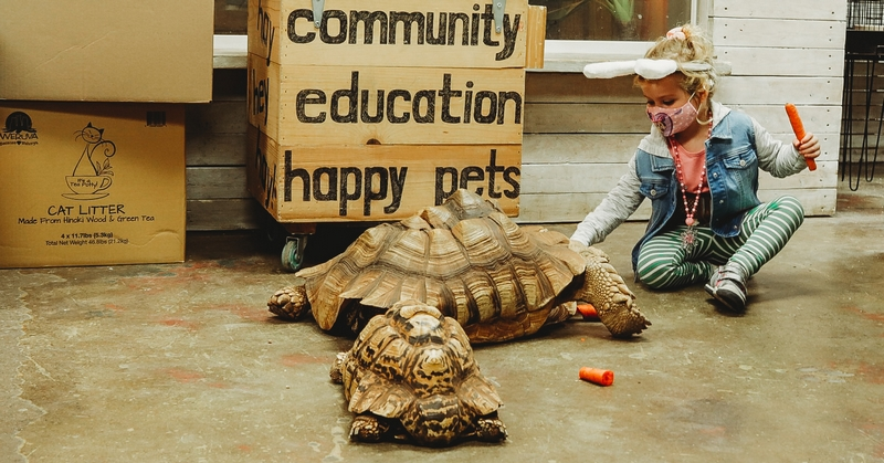 Tortoise at Lou's Pet Shop in Grosse Pointe Woods