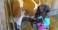 fb Oxford Upland Hills Farm Fall Festival Harvest (3)