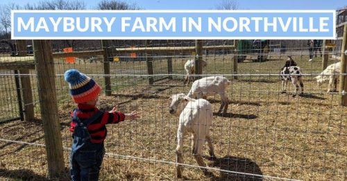 2021 Maybury Farm in Northville – Visitor's Guide