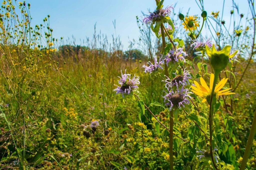 wildflowers at Carpenter Lake Nature Preserve