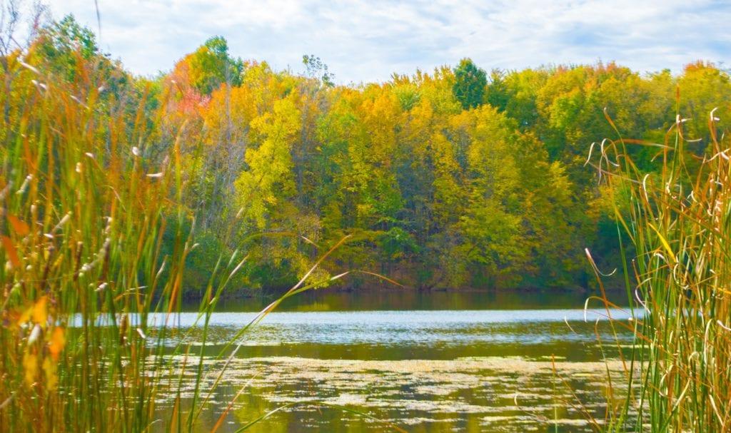 Maybury State Park