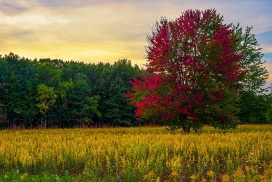 Independence Oaks- Clarkston: Oakland County's Largest Park
