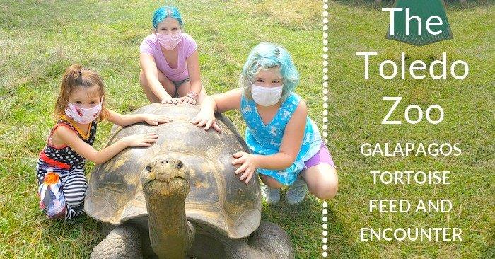 Toledo Zoo's Oldest Resident: Galapagos Tortoise Feed and Encounter