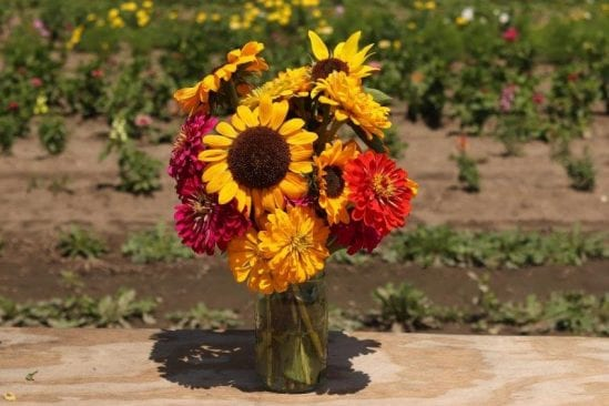 U-pick flowers: 12 for one large mason jar.