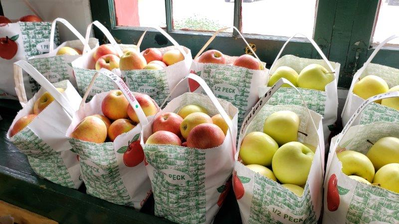 lots of apples at Rochester Cider Mill