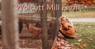 fb Wolcott Mills Ray (9)