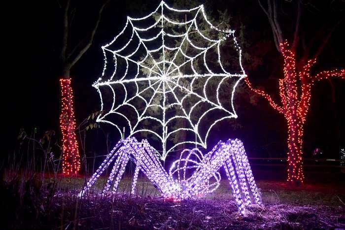 wonderful light display at the Detroit Zoo