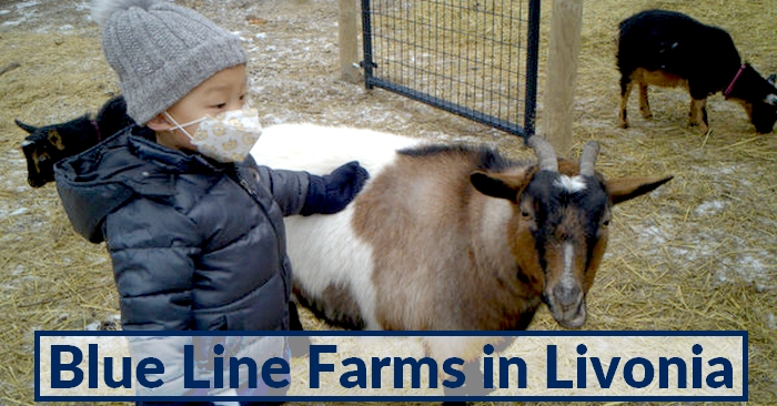 Blue Line Farms in Livonia