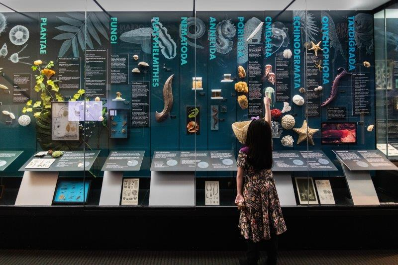 Life on Earth exhibit at the Cranbrook Institute of Science