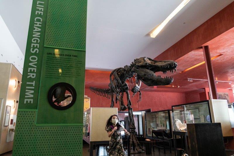 Tyrannosaurus Rex at Cranbrook Science Center
