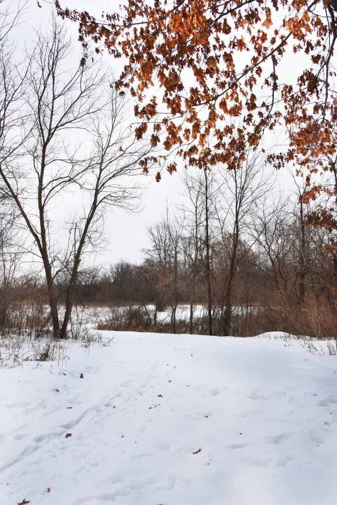 Winter Activities at Oakland County Parks  Highland Oaks