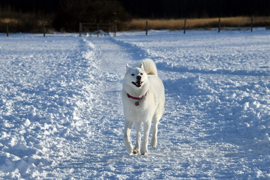 Winter Activities at Oakland County Parks