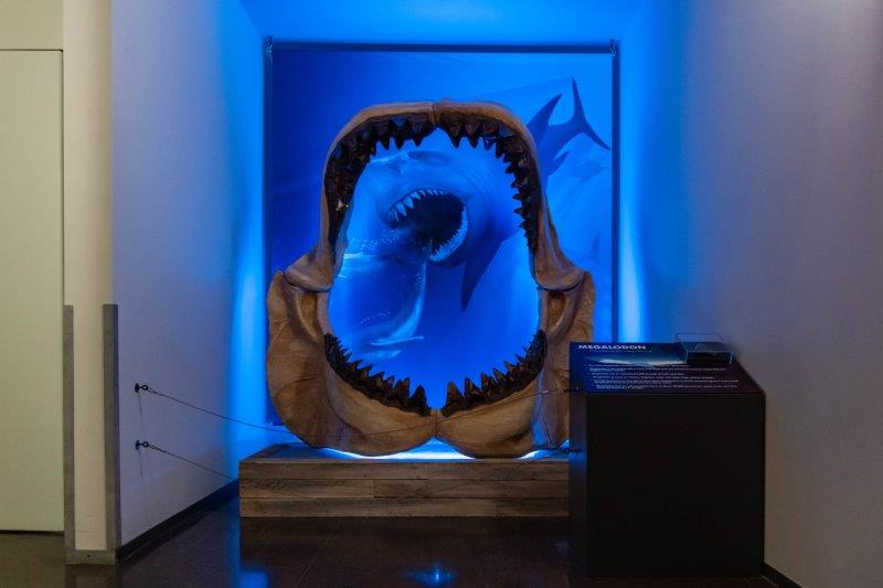 Megalodon at Cranbrook Science Museum