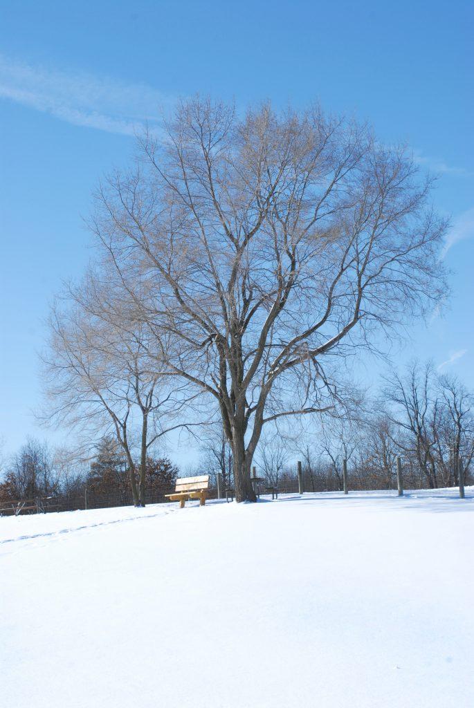 Winter Activities at Orion Oaks