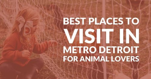 Eight Best Petting Farms and Petting Zoos in Metro Detroit