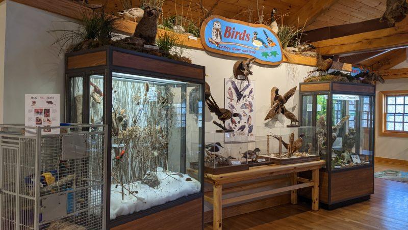 Birds exhibit at Farmington Hills Nature Center