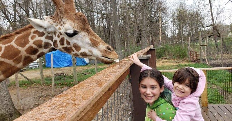 meeting the giraffe at Indian Creek Zoo in Lambertville