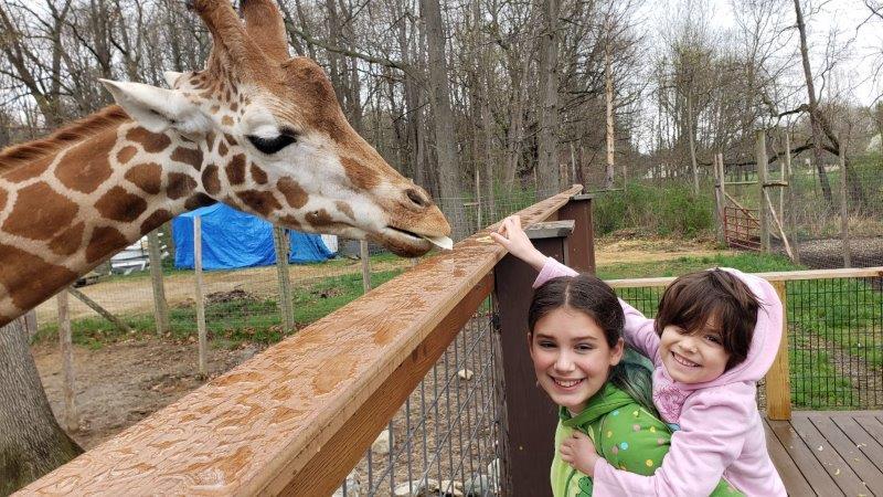 meeting the giraffe at Indian Creek Zoo in Lambertville
