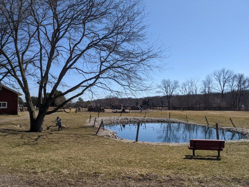pond at Maybury Farm in Northville