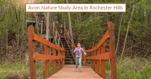Avon Nature Study Area in Rochester Hills: Family-Friendly Trail
