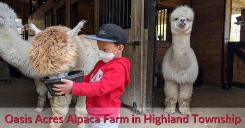 Oasis Acres Alpaca Farm in Highland Township