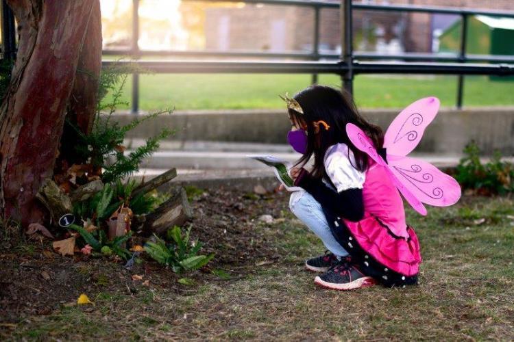 Fairy Doors at Belle Isle Park in Detroit (4)