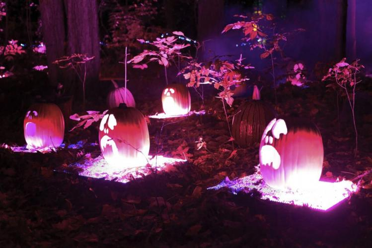 Glenlore Trails Haunted Forest pumpkins