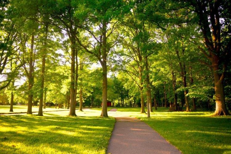 Jaycee Park in Troy (21)