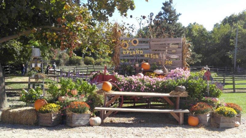 Oxford Upland Hills Farm Fall Festival Harvest (19)