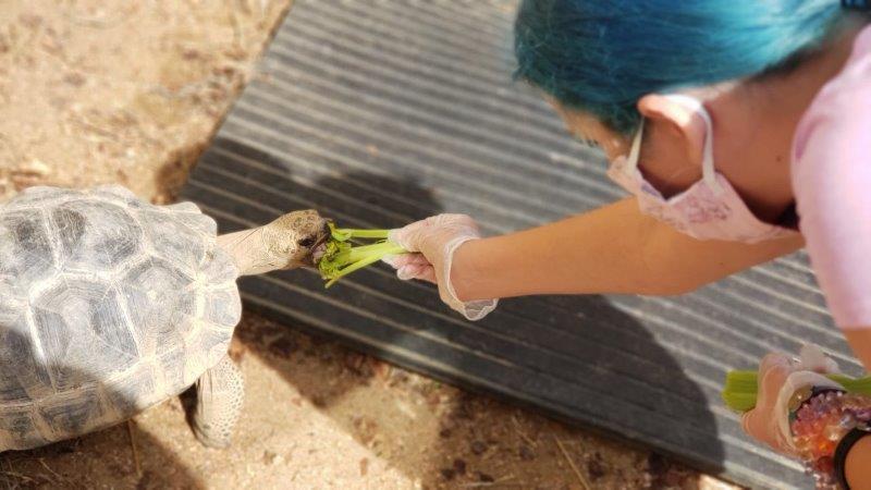 The Toledo Zoo Galapagos Tortoise Experience (1)