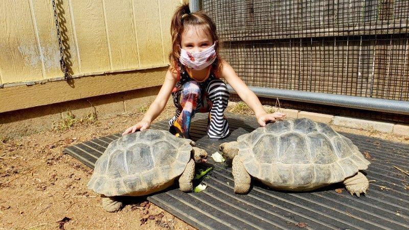 The Toledo Zoo Galapagos Tortoise Experience (2)