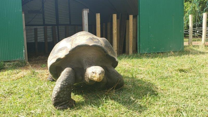 The Toledo Zoo Galapagos Tortoise Experience (4)