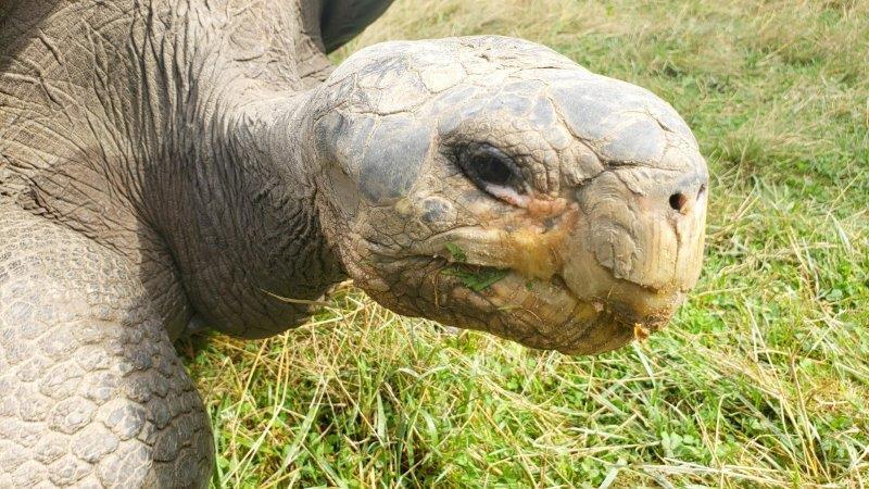 The Toledo Zoo Galapagos Tortoise Experience (5)