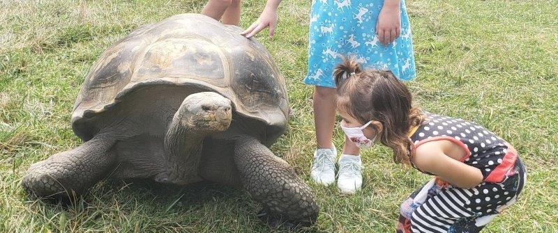 The Toledo Zoo Galapagos Tortoise Experience (6)