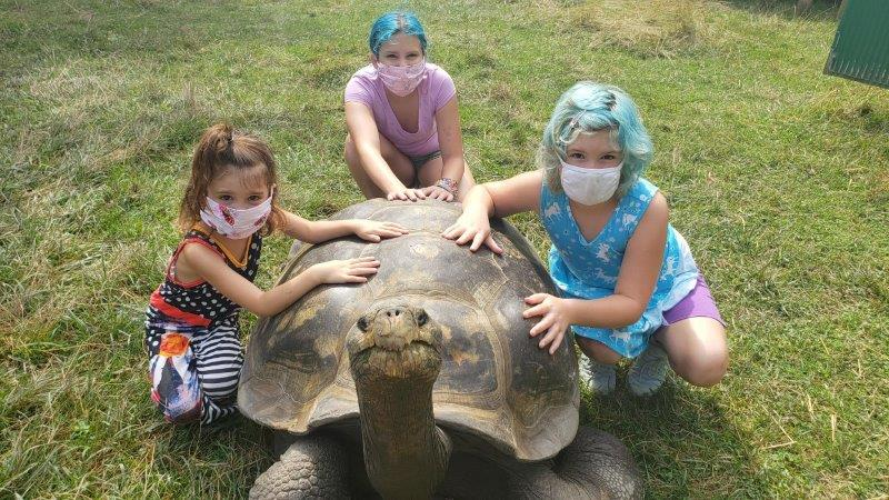 The Toledo Zoo Galapagos Tortoise Experience (7)