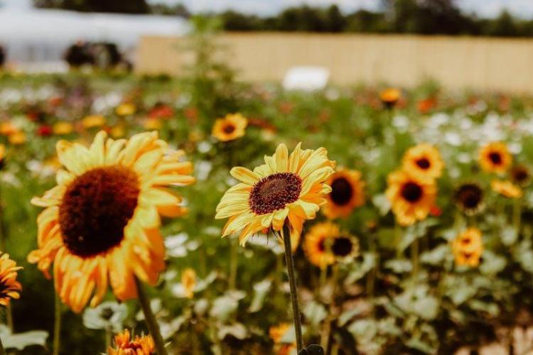 Vanhoutte Farms (7)