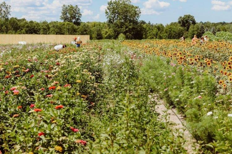 Vanhoutte Farms (8)